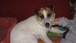 Di chi è questa cagnolina? - Cronaca - L'Eco di Bergamo - Notizie di Bergamo e provincia