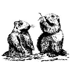 Marmotta gem  0